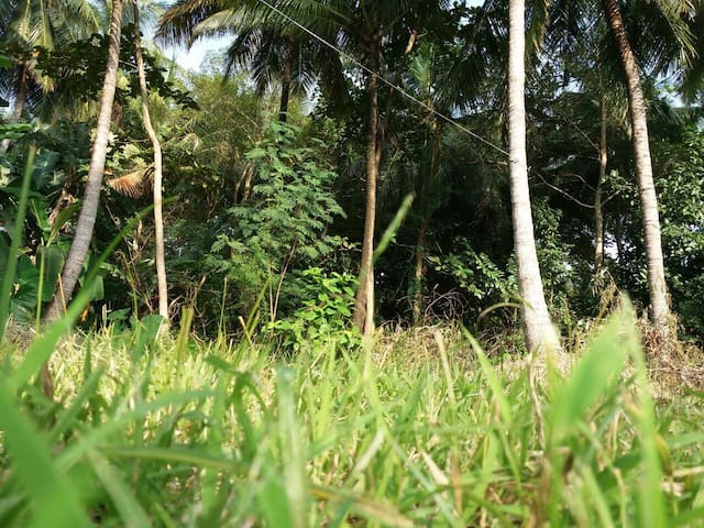 Secluded Heart of Polonnaruwa