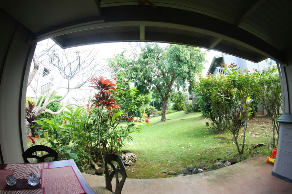 Your garden view from lanai door - grassy lawn and large deep pool beyond the tall tree.