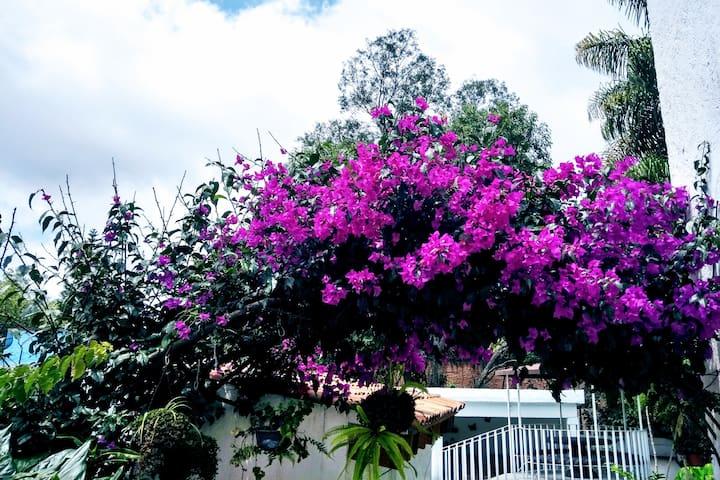 El rincón de la bugambilia en Cuernavaca