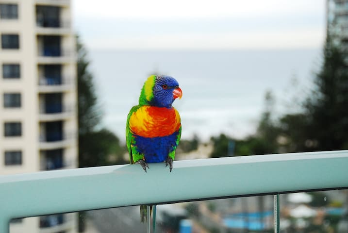 Our little friends on the Balcony