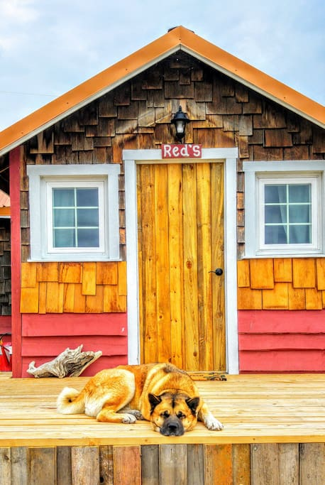 Cozy Rustic Cabin 5 Min From Cody 4 Cabins For Rent In