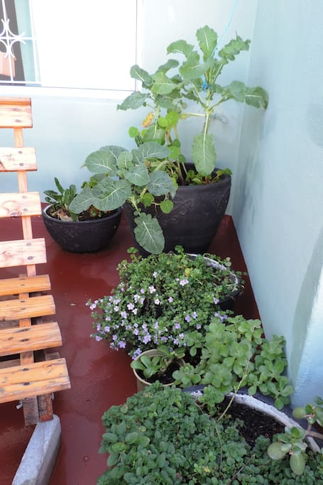 Little garden with flowers and herbs on the balcony