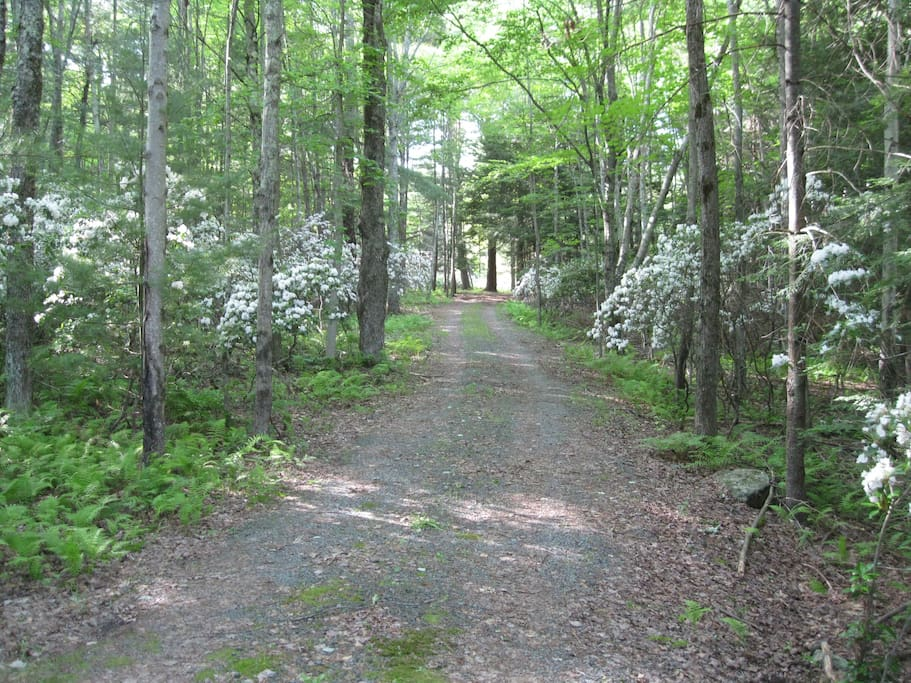 Driveway to the cottage