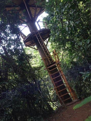 The leader up to the treehouse. (Die Leiter zum Baumhaus.)