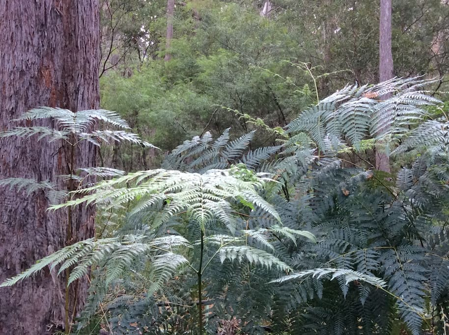 There are changes in flora and fauna around the property, this is near the creek