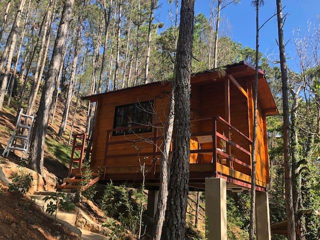 Casa Arbol en los pinares