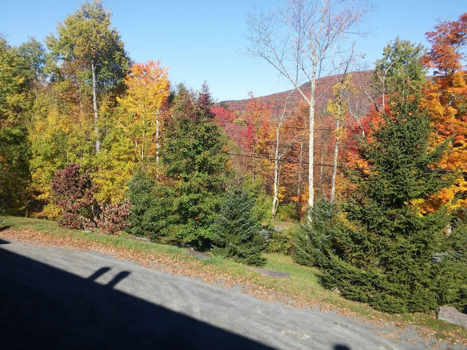 Fall view from front balcony