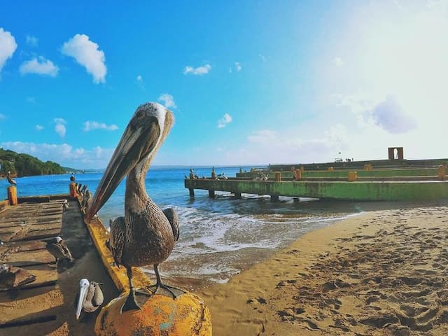 Pelican Reef Vacation Rental 3 bds / 2 ba