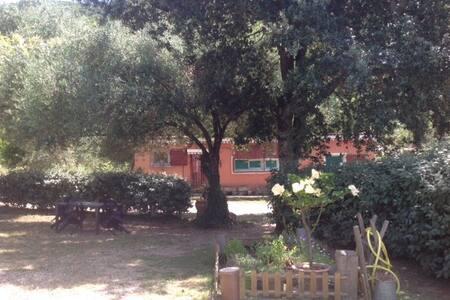 Maisonnette sous les oliviers 4 personnes - Cauro