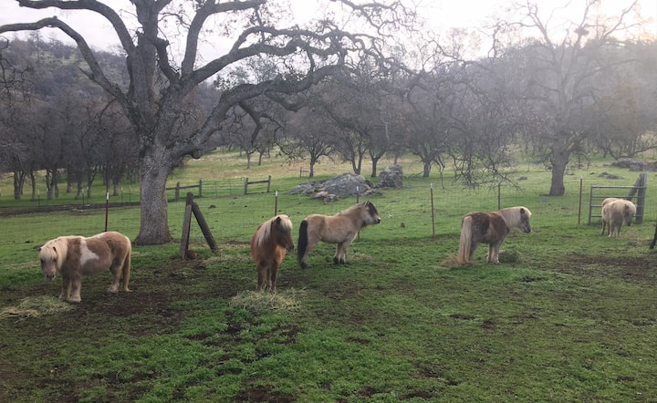 """""""The 56"""" - Yosemite Foothills Ranch - Pet Friendly"""