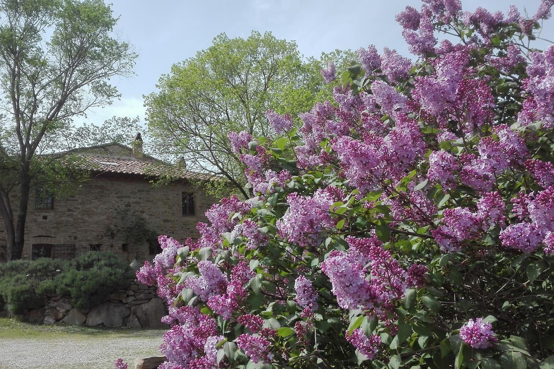 La casa dietro ai lillà