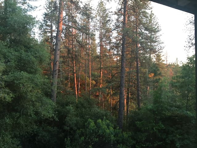 Pines,Spa-Close to Hist Main St - Placerville - Apartment