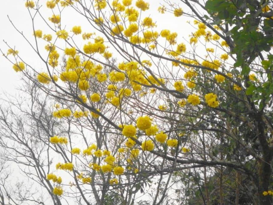 Naturaleza, flora y fauna