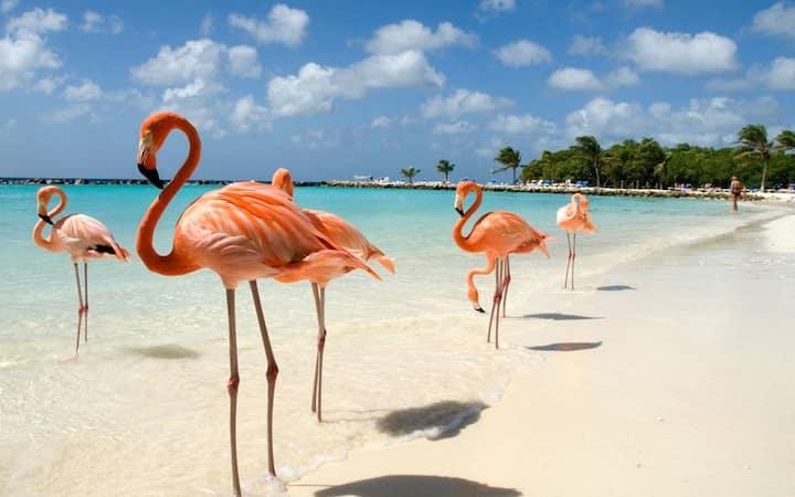 Aruba, Newly Built 1 Bedroom Apartment Palm Beach