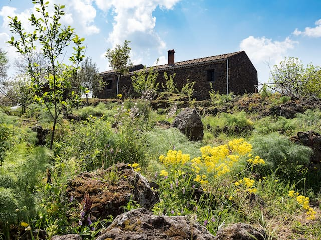 Cottage among the Etna's vineyards