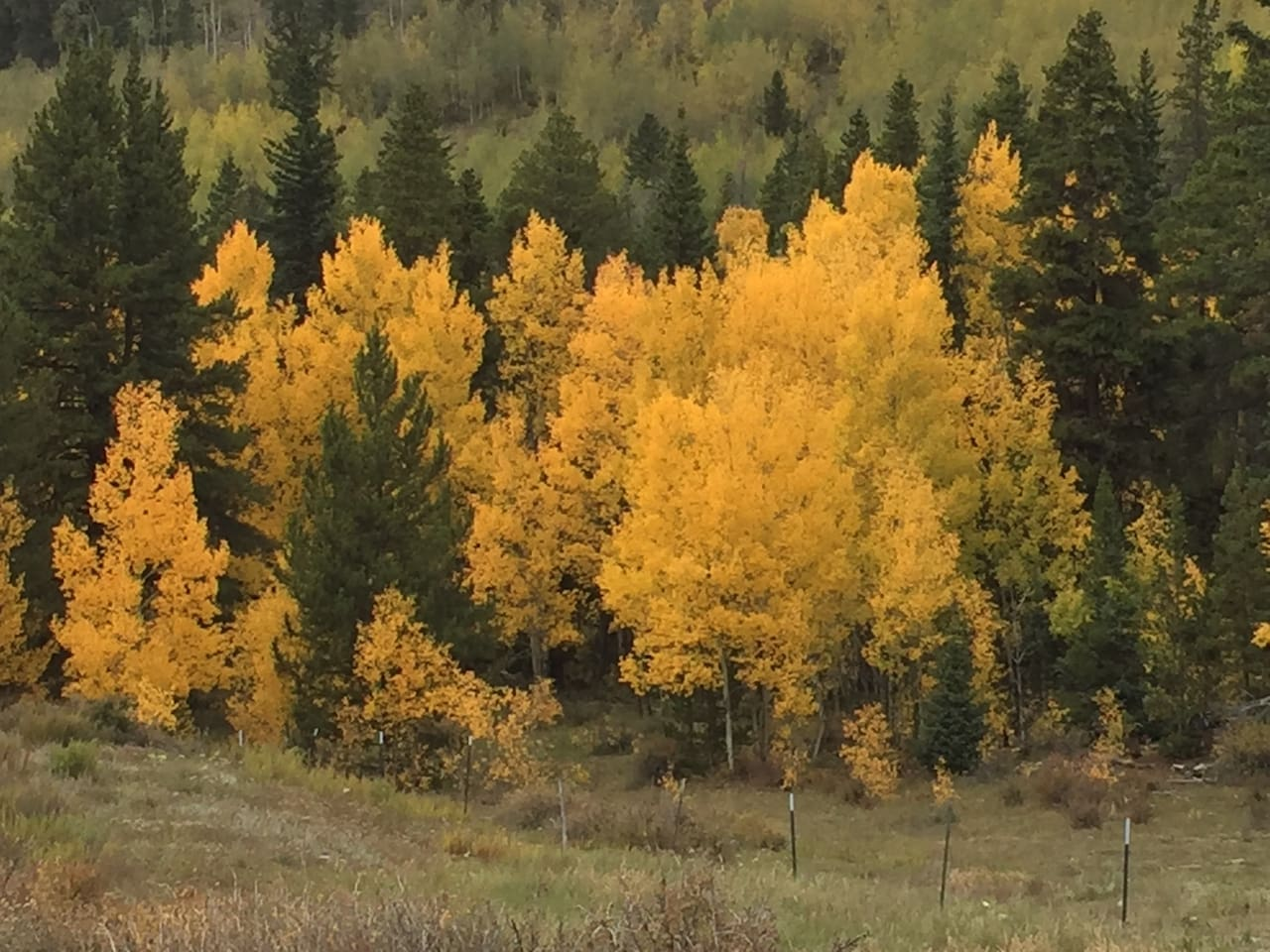 High Plains Outpost is surrounded by some of the most spectacular aspen trees in Colorado each fall. Lots of leaf-watching beauty within 15 miles.