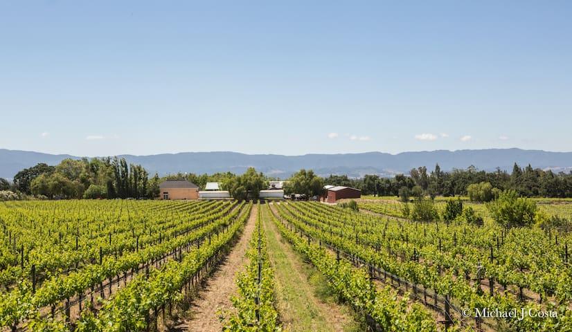 Los Olivos Vineyard Home on Winery Estate