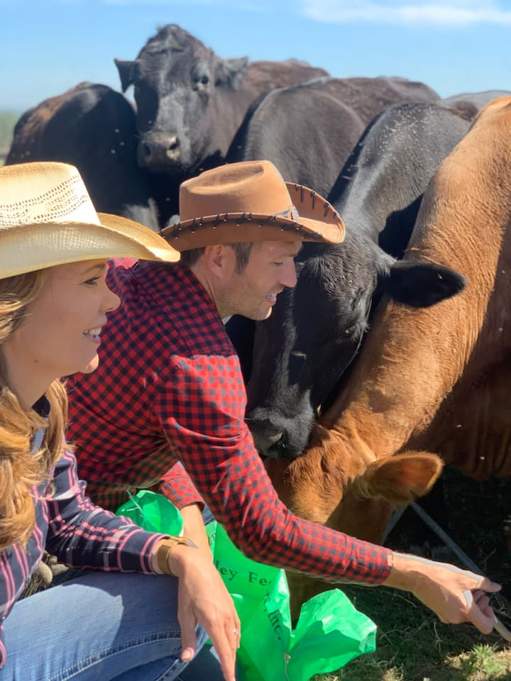 Feed the cattle by hand