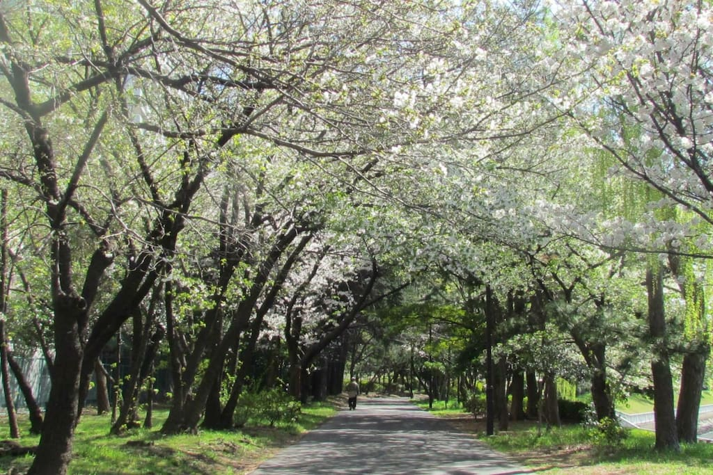 1 min walk, Riverside is donned by cherry blossoms.