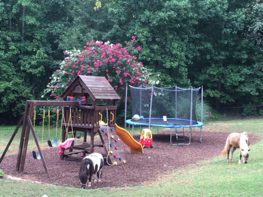 Large fenced in back yard - trampoline and play set. Mini horses and mini goats to enjoy.