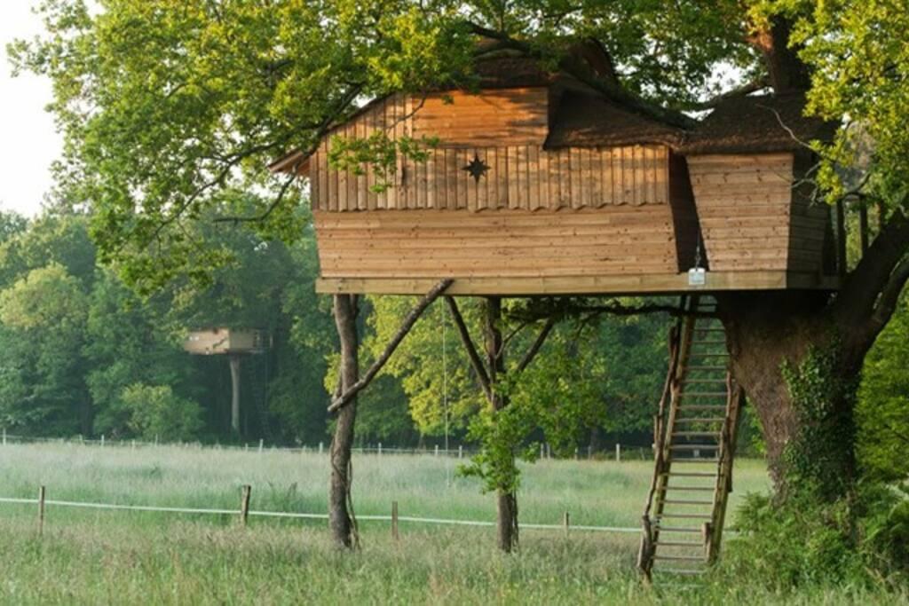 Notre jolie cabane perchée Sterenn