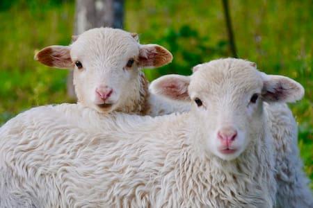 Wool Home in Évora | Alentejo Countryside #2
