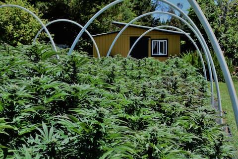 Humboldt Cannabis Farm Studio