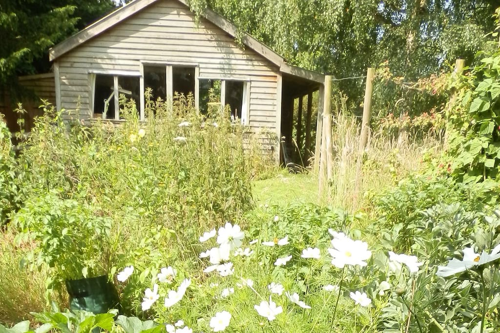 The Flowerbed Shed in summer