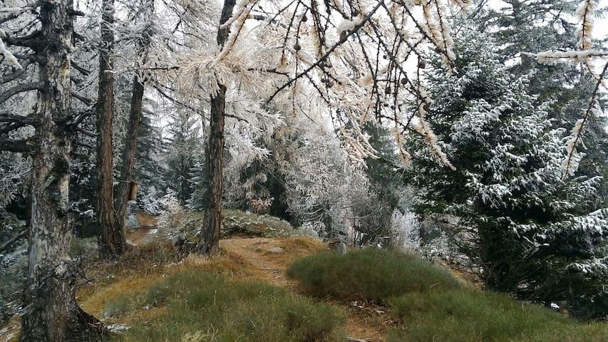 trail running matinal
