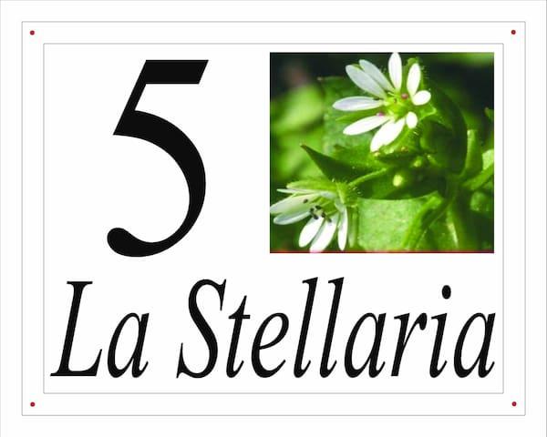 I fiori del Pollino - La Stellaria