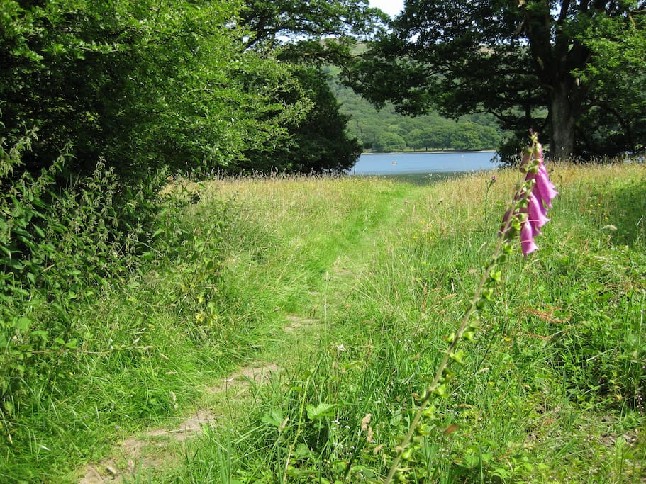 Path down to Coniston lake shore from cottage