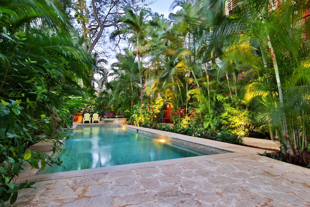 The views of your pool are always inviting.  Notice the tropical gardens with lush canopy. You have a high wall surrounding the property for privacy and security.