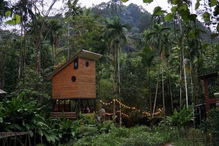 Eco cabin x Lovebirds