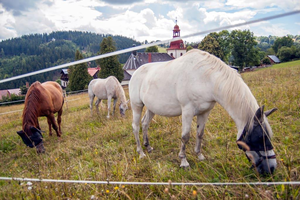 naše koně