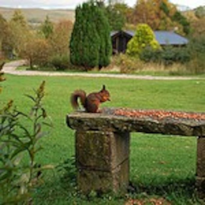 Exclusive private grounds with just 3 spacious solid log holiday homes for you to choose from. Red Squirrel not included!