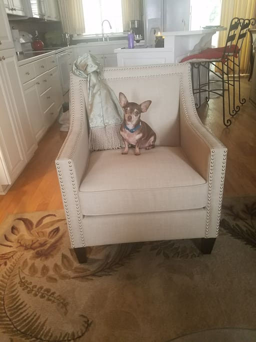 Chihuahua not included...