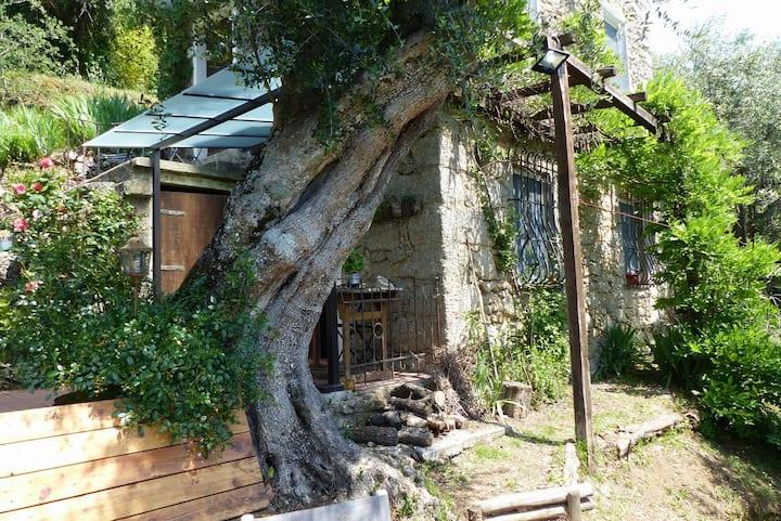 Idyllic Home on the Versilia Hills,Wi Fi,aircon