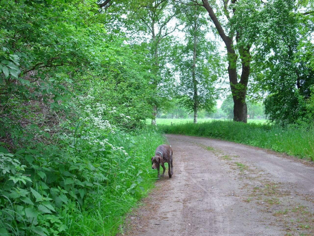 Urlaub in Friesland Fewo Elsa in Nordseenähe