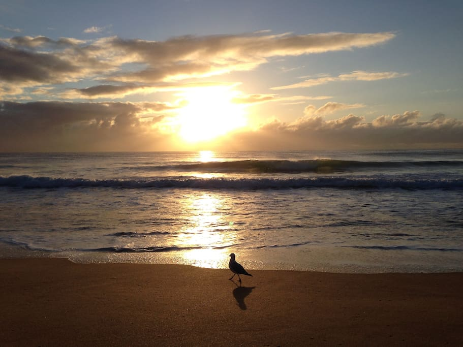 Narrabeen Beach Sunrise