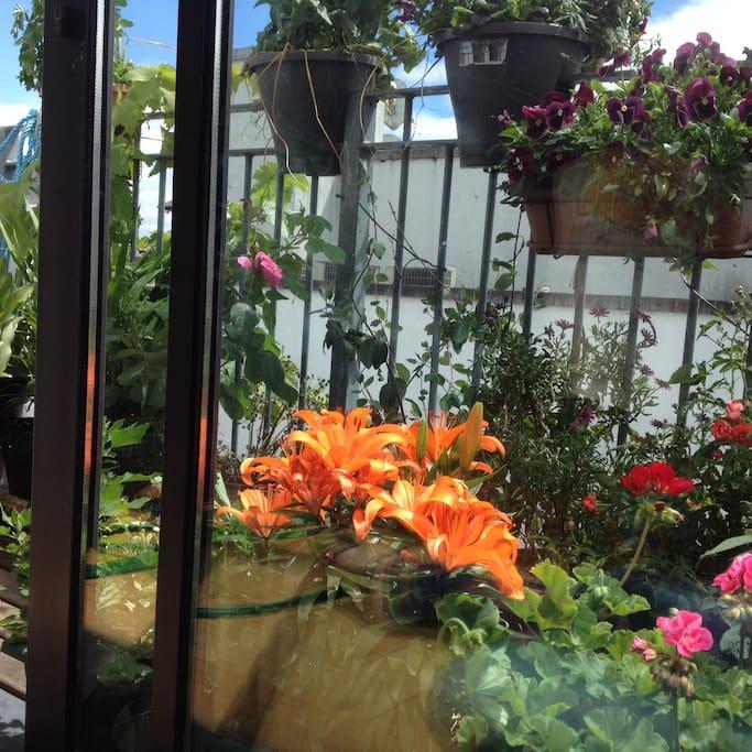 Balcony in full bloom