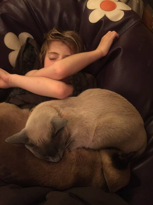 Our two burmese cats who'll demand attention