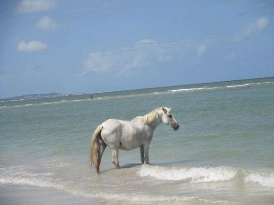 You will see some horses pasturing along the beaches