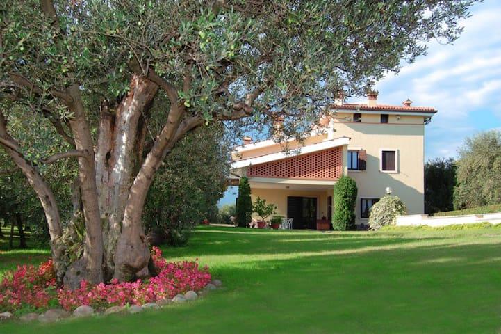 Agritourism: wine cellar and hills (Lake of Garda)