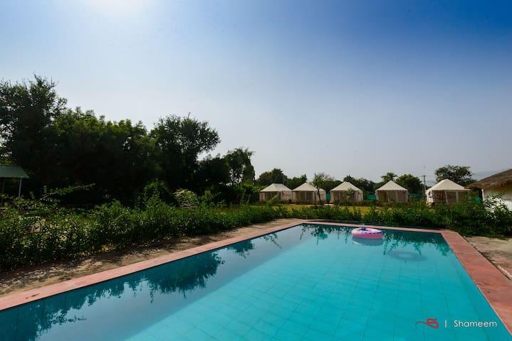 Camping Resort 1 - Pushkar - Tält