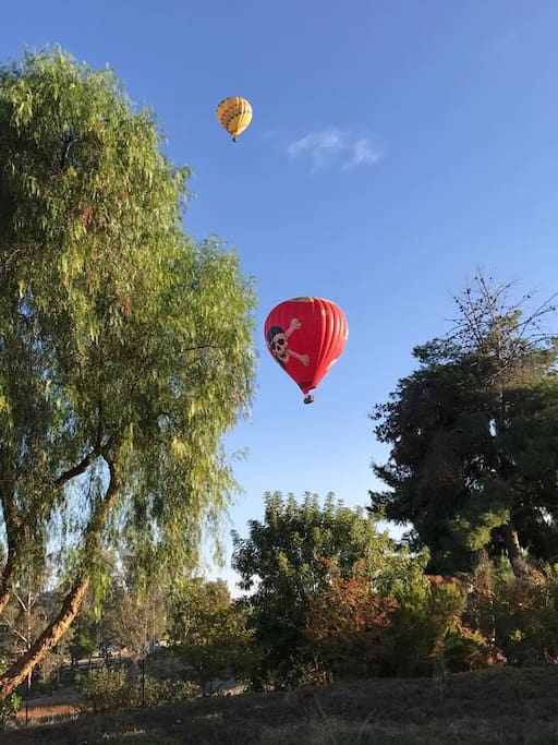 Most mornings you can see the beautiful hot air balloons as they float across Wine Country.