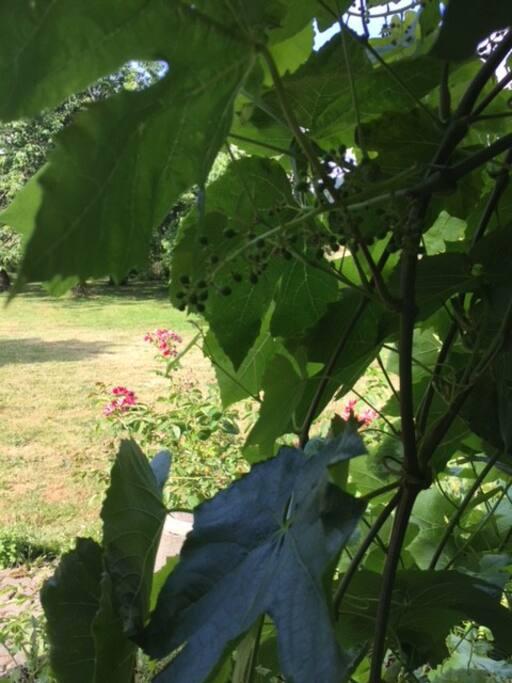 Lush in summer, quiet year-round.