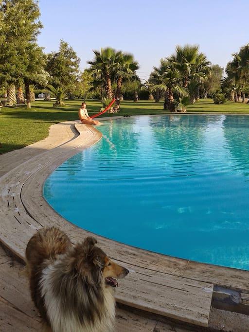 piscina a sfioro ed ospite