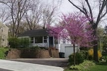 My Redbud tree blooms in May.