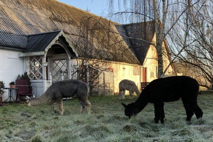 Alpaca House - hus på landet tæt på byen
