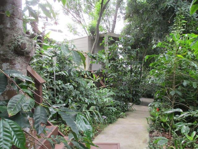 Secluded Tropical Honeymoon Hideaway